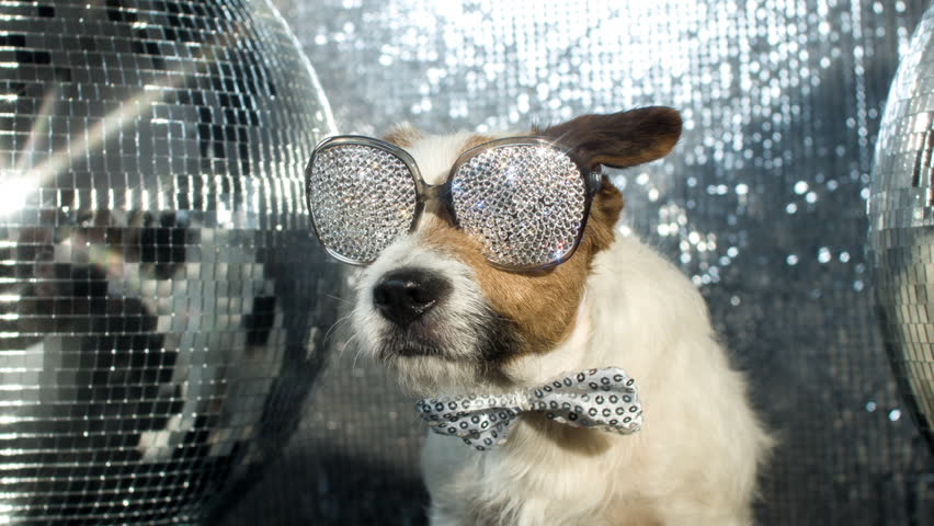 cute jack russell dog with crystal covered sunglasses in a disco setting #17565994