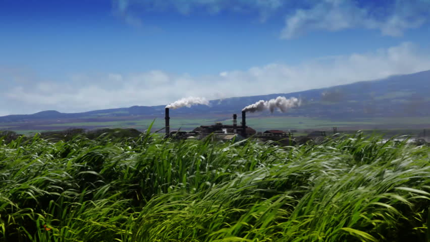 Sugarcane Field and Refinery Hawaii