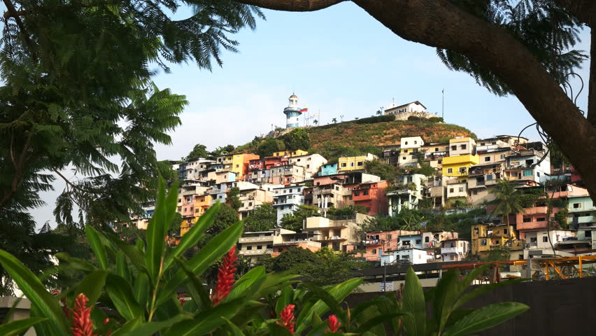 the colorful neighborhood of cerro santa ana in guayaquil ecuador framed by trees and ginger flowers