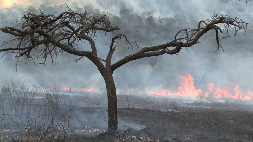 Wildfire raging in South African savanna