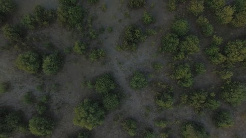 Aerial shot of mangroves during evening