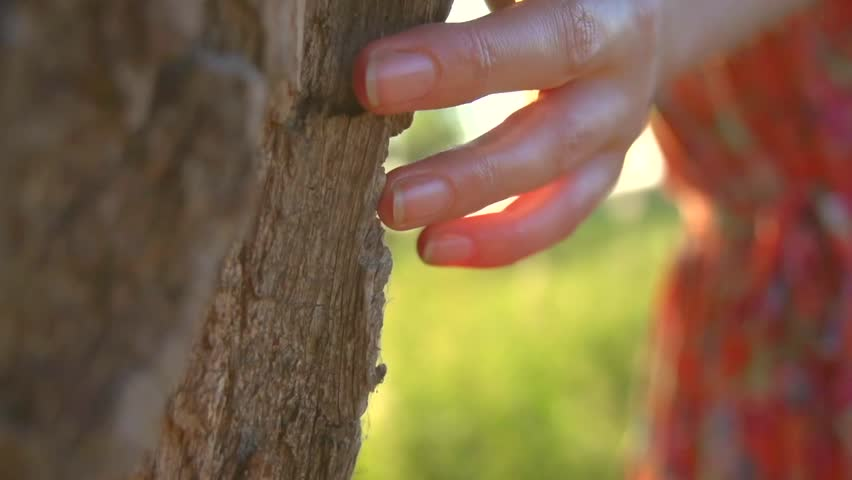 Beautiful young woman enjoying nature, touching tree outdoor. Beauty model girl walking in summer park. Person Hand Touches Tree closeup. Environmental protection concept. Slow motion, full HD 1080p