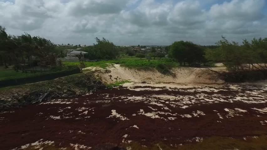 Aerial view of Sargassum Algae seaweed on the Coastline of Tropical Island - Bridgetown, Barbados - October 12, 2015