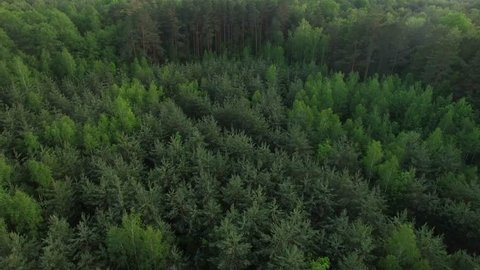 4K HD Aerial view flying over green wood of mixed tree tops â?? camera zooming into dense forest area with spruce birches and pine trees