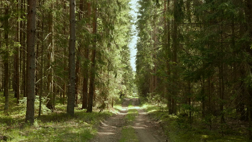 Forest paths. Smooth, slow slider shot. Clean and bright daytime (wide shot) | Shutterstock HD Video #18012454