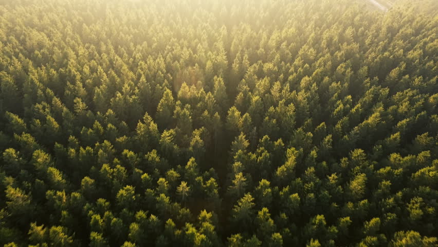Dronefootge above forest in Jutland, Denmark | Shutterstock HD Video #18047980