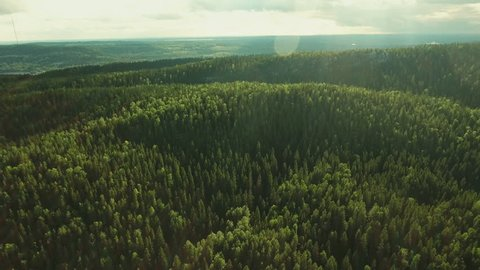 Aerial Shot of Mountains on the coast Covered with Pine Forest