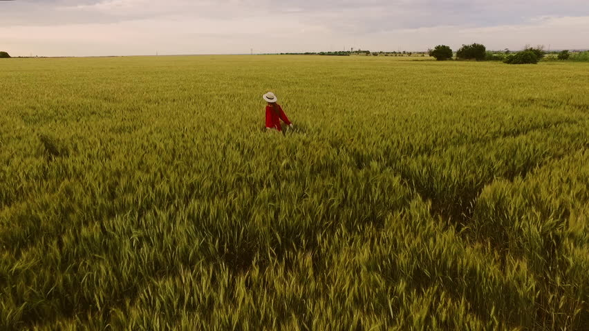 Young beautiful girl with foxy hair in red dress and hat walking in field. Slow motion. Aerial view.