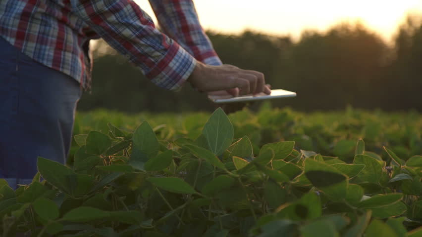Farmer at sunset in a field with a tablet computer. Slow motion