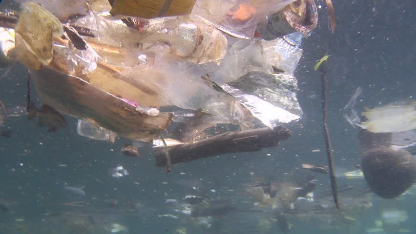 Ocean scenery rubbish and pollution, juvenile chub among floating plastic, environmental, trash, garbage, litter, in bluewater, HD, UP24025