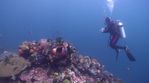 Ocean scenery diver drifting with current over beautiful healthy and diverse reef, on shallow coral reef, HD, UP22009