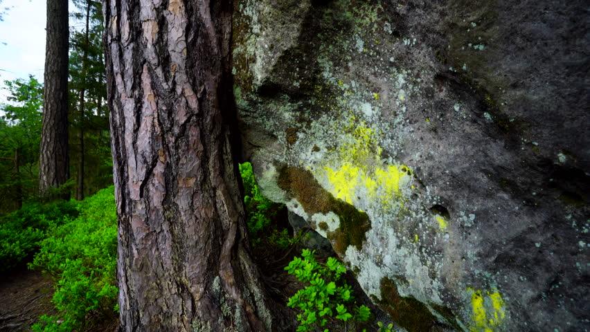 Bohemian Switzerland National Park | Shutterstock HD Video #18672164