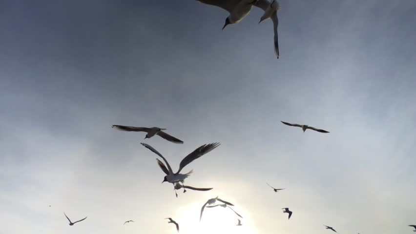 Beautiful Seagulls flying in the sky | Shutterstock HD Video #18718124