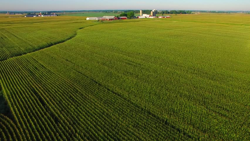 Strikingly beautiful aerial view of mature corn fields, farms in distance.
