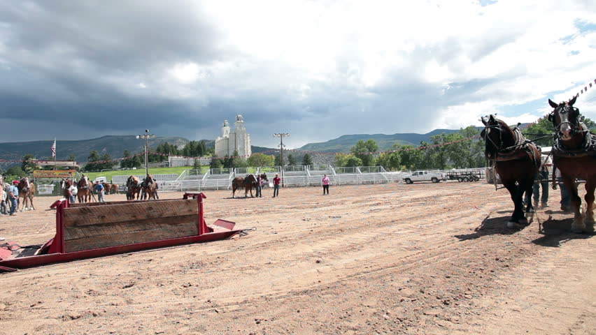 MANTI, UTAH - AUG 27: Horse pulling competition at local county fair with draft horses dragging a heavy sled on a long run on August 27, 2011 in Manti Utah.