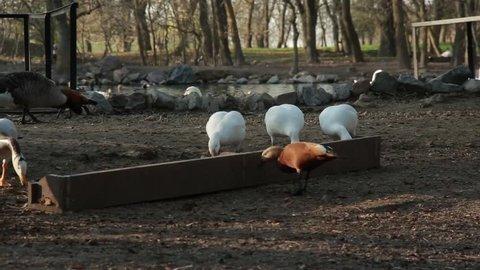 Animal Nursery in Askaniya, Ukraine