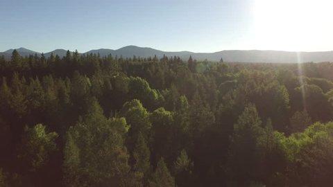 Stunning aerial shot over the woods of Portland Oregon.