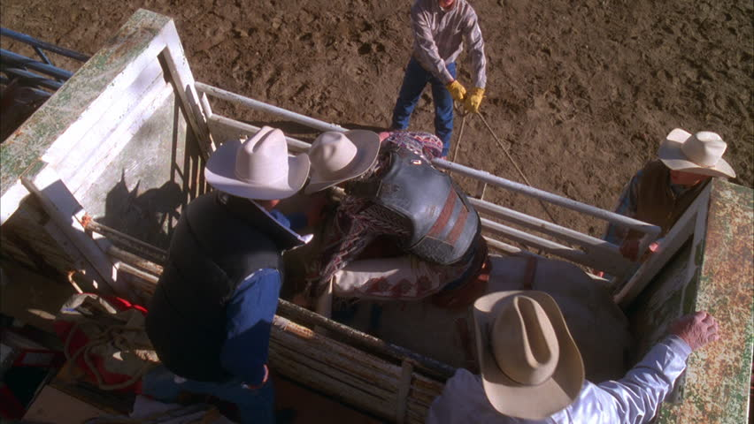 Day High down over holding pen, rodeo cowboy getting ready ride bucking bronco horse | Shutterstock HD Video #19022668