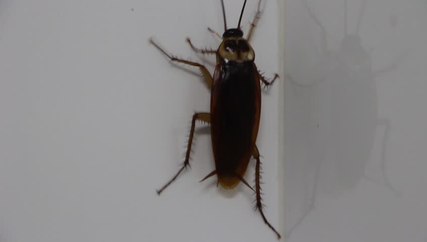 Stock Video Of Cockroach Insect In Bathroom Animal Life - Cockroach in bathroom