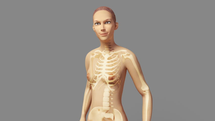 Anatomy Of A Young Beautiful Female With Visible Skeleton Inside Of