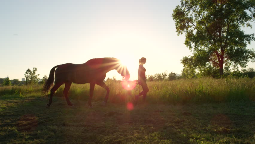 SLOW MOTION, CLOSE UP: Young girl taking on a walk her dark bay stallion by the reins on stunning golden sunset. Beautiful mighty gelding horse walking and gazing on meadow field at sunny morning