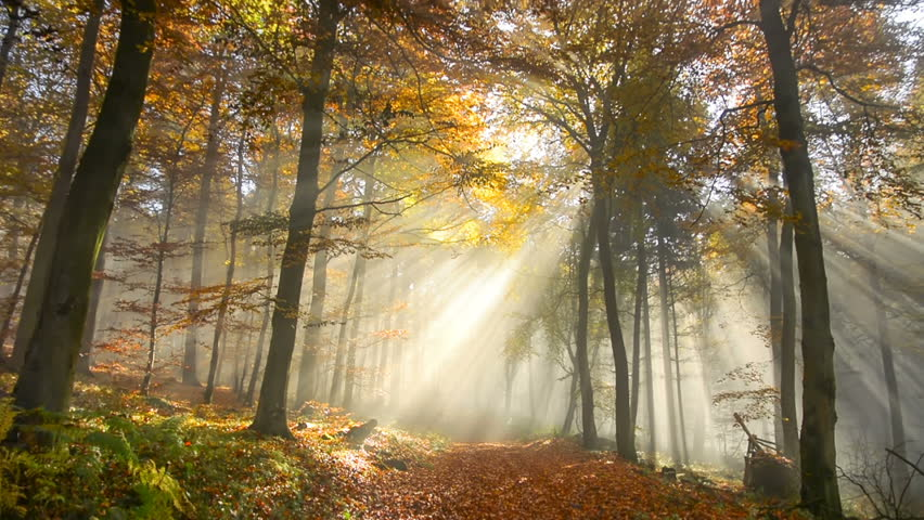 Tracking shot of a beautiful misty forest  in autumn, with rays of sunlight falling through the trees