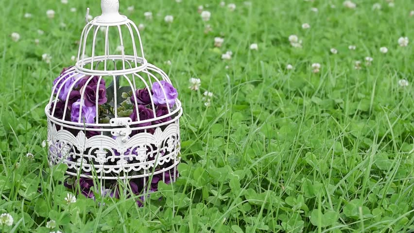 Decorative Artificial Flowers In Vintage Bird Cage Against Green Field Clover Flower Grass With Insects