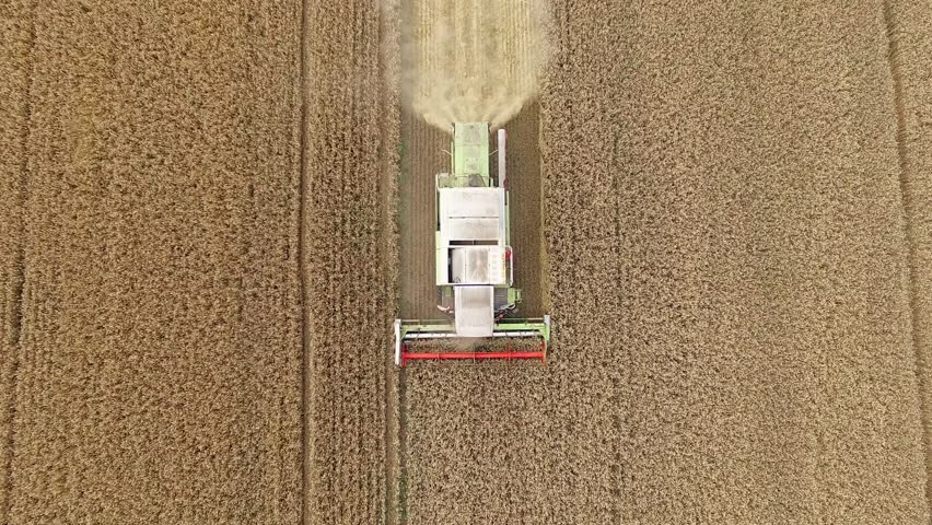 Harvester in wheat rye field aerial static top view 4k video. Harvest agriculture farm rural landscape. Bread production concept: combine crops grain.