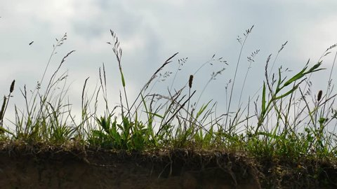 Steady wind blows over tall grass on the brink of a bluff on a dreary. overcast day. 4k UltraHD footage