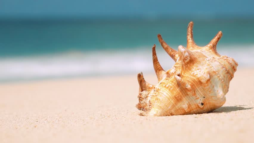 Beautiful orange shell on white sand beach washed by a wave, close up