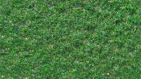 Fresh green grass shot from top view,with wind flowing, seamlessly tiled texture, small low lawn, perfect for digital composition, video mapping. camera is above the field and it is static.