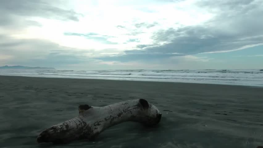 Driftwood on the Oregon coast | Shutterstock HD Video #1959934