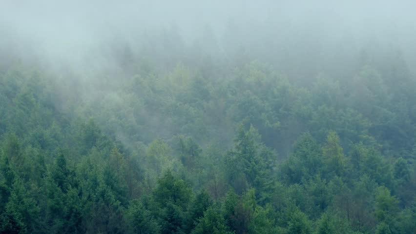 Header of misty