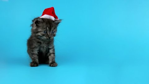 Little gray cat in red Santa Claus hat yawns, waiting for Christmas eve, ready to keying
