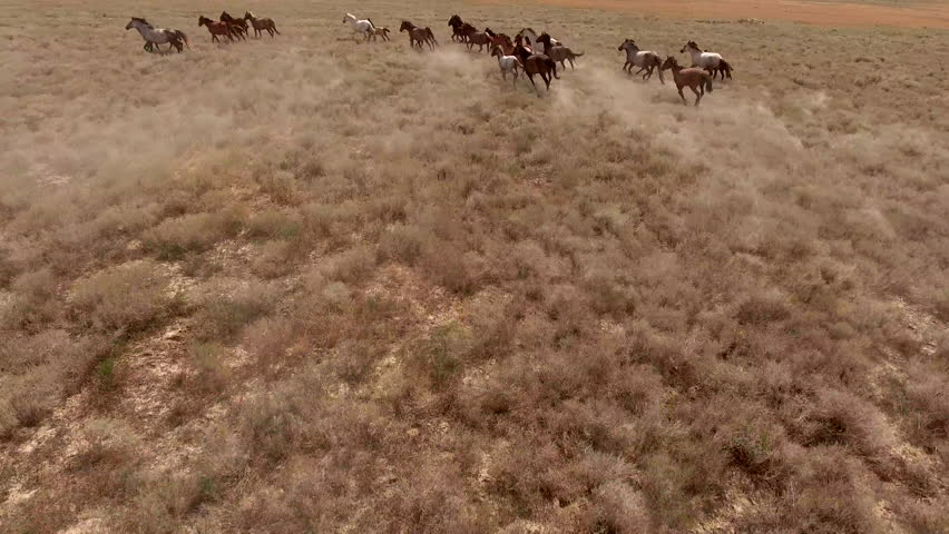 Aerial movie with herd of thoroughbred horses moving fast on the desert. Herd of wild mustangs running gallop on the scorched earth of Texas. The concept of freedom, strength, independence and speed #19899973