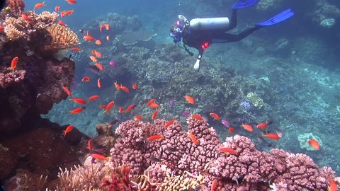 Ocean scenery on shallow coral reef, HD, UP16870