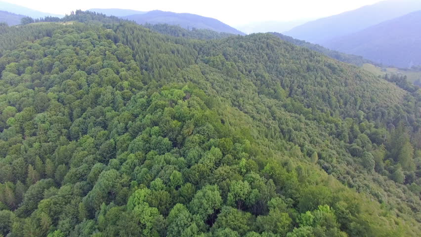 Mountains covered with green forest. aerial footage   Shutterstock HD Video #20120584