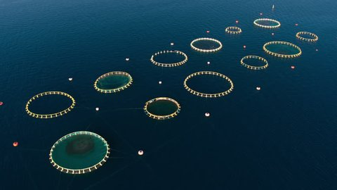 Aerial - Flying above fish farm in the Adriatic Sea with circular cages for breeding Seabream and Seabass fish