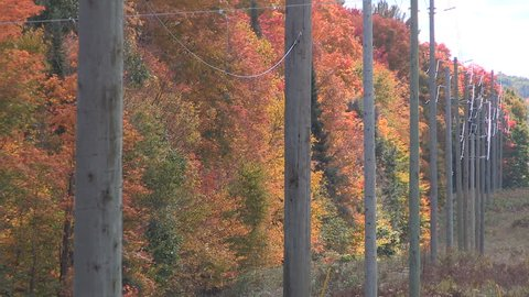 Muskoka, Ontario, Canada October 2016 Hydro electric power transmission poles and autumn colors
