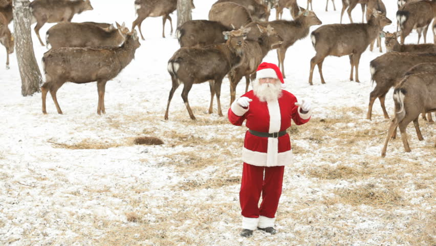 Santa Claus having fun and dancing amongst deer