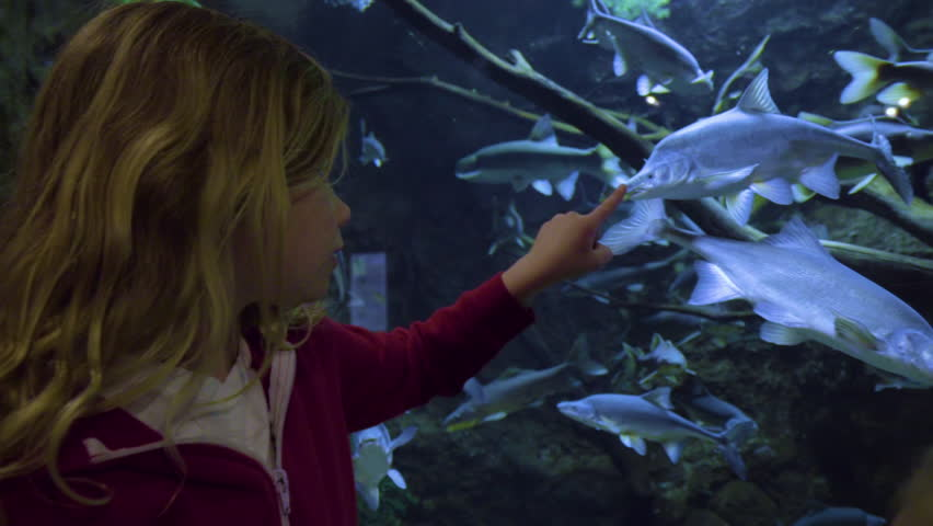 Little Girl Traces Her Finger Along Glass Of Aquarium Tank, Fish Follows, She Makes A Funny Fish Face At It