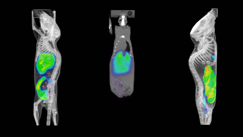 HD video of 3 laboratory mouse PET/CT scans, 2 3D reconstructions rotating, and 1 fly-through coronal.