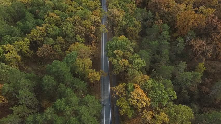 Aerial view of the colorful autumn forest.Look down on autumn forest.Aerial view on the way in the forest