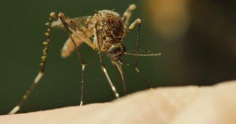 Mosquito borne diseases include malaria, dengue, zica