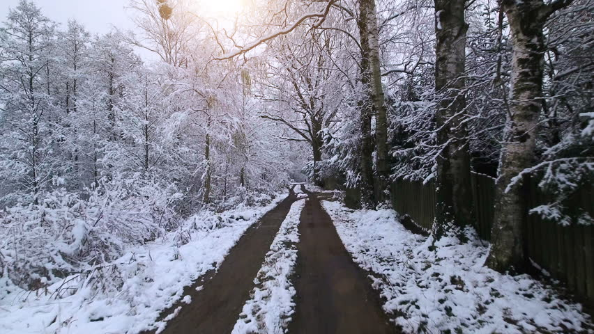 Aerial Video.Winter forest. Forest in snow.  Low flight between the snowy trees   Shutterstock HD Video #21389524