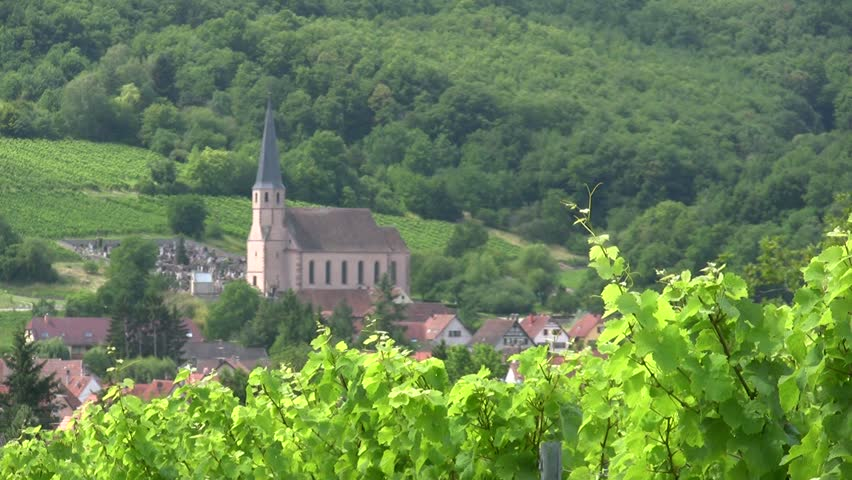 Vineyard with church in the background.Alsace.