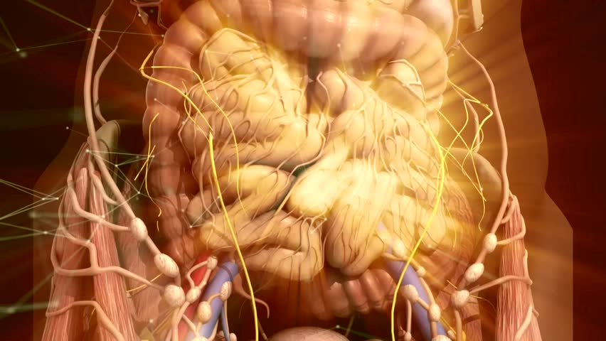 Human Anatomy Guts Inside The Stock Footage Video 100 Royalty