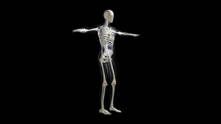 animation of human skeleton of a human body gyrating on black, Skeleton