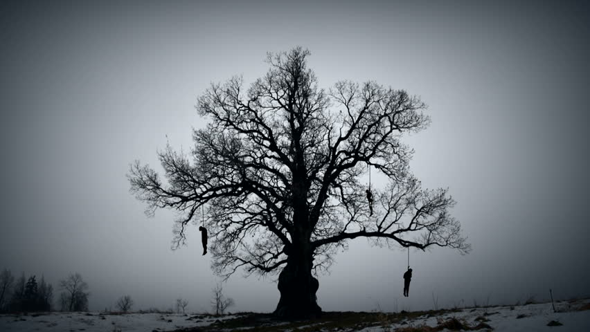 Gloomy hangman tree. Gallows on the old oak.