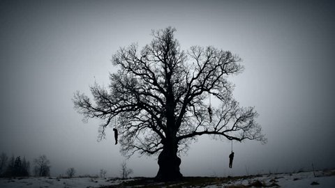 Gloomy hangman tree. Gallows on the old oak.